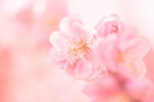 <撮り方ブログ> お花